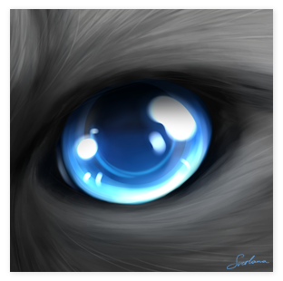 Ragdoll Eyes Digital Art Preview